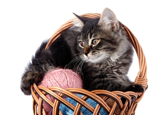 Fluffy cat in a wattled basket with woolen balls.